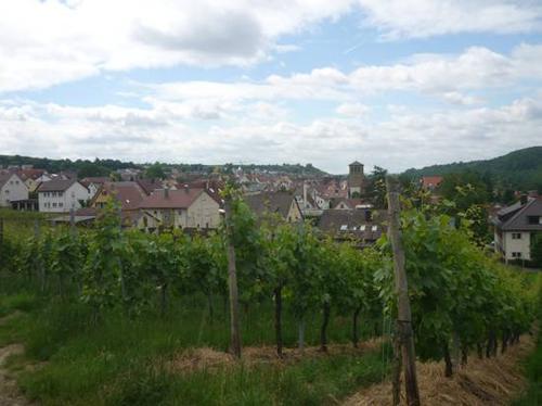 mundelsheim-2014--0036